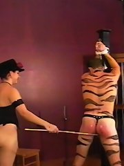 Classy but cruel young mistress punishes tiger-man